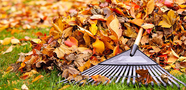 Fall Preparation Raking Leaves